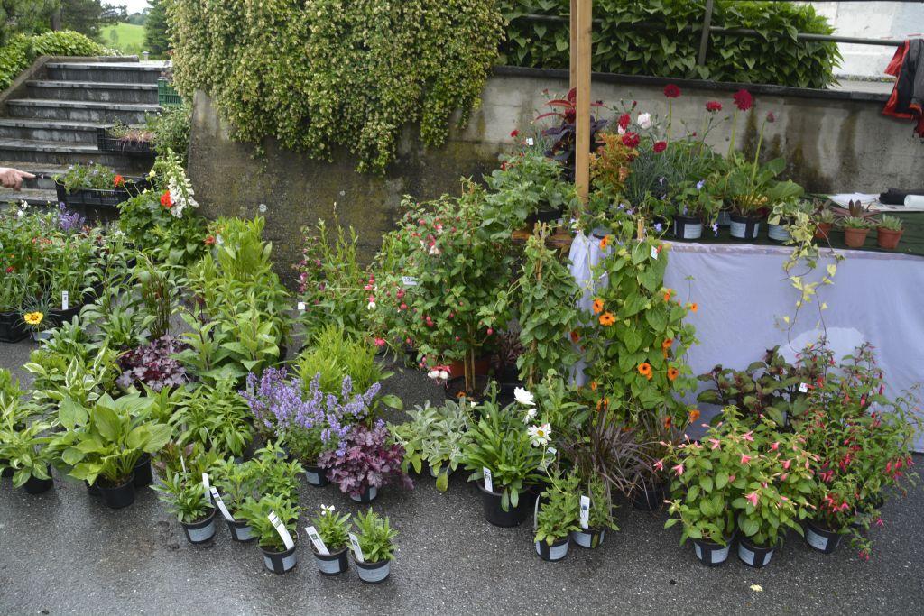 Alberschwender Gartenmarkt 11.Juni 2016 18.jpg